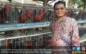 Penjelasan Kementan soal Penurunan Populasi Ayam Petelur di Blitar - JPNN.COM
