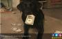 Anjing Ini Doyan Duit - JPNN.COM