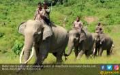 Empat Gajah CRU di Aceh Terancam Kelaparan - JPNN.COM