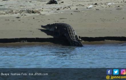 Ngeri Banget, Tubuh Nelayan di Mulut Buaya - JPNN.COM