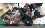 Polisi Kembali Temukan Kedai Jamu Jual Miras Oplosan - JPNN.COM