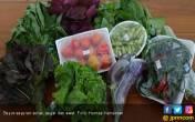 Sayuran Sehat, Segar, dan Awet Berkat Biochar - Kompos - JPNN.COM