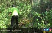 Satu Hektar Hutan Jati Terbakar - JPNN.COM
