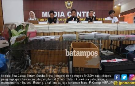 BC Gagalkan Penyeludupan 909 Ekor Kura-kura dari Malaysia - JPNN.COM