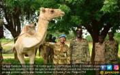 Merayakan Iduladha di Sudan, Satgas TNI Potong 17 Unta - JPNN.COM