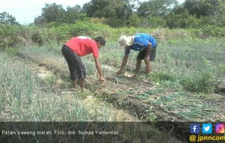 Geliat Produk Hortikultura di Kabupaten Janeponto - JPNN.COM