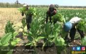 Semua Regulasi Soal IHT Berdampak Pada Pekerja di Sektor Tembakau - JPNN.COM