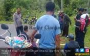 Hewan Bertanduk Sering Hilang di Cianjur, yang Tersisa Tinggal Dalamannya - JPNN.COM
