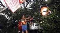 Pengendara Motor Terluka Tertimpa Pohon Tumbang di Batam - JPNN.COM